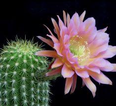L'EBA, le banche italiane e il fiore del cactus